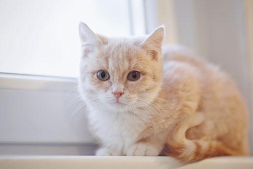 Helena Pet Resources