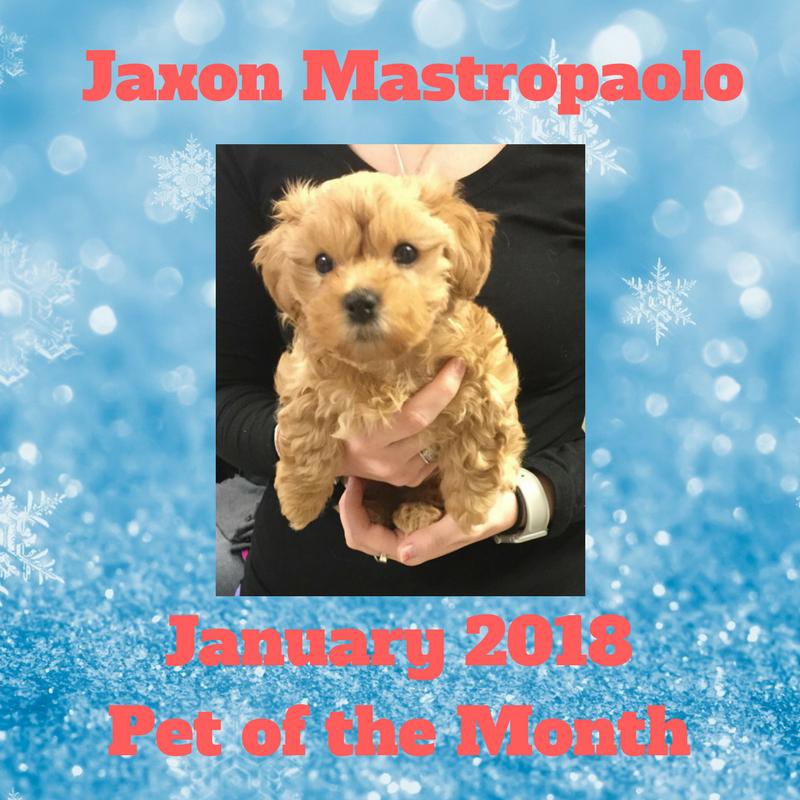 Jaxon Mastropaolo