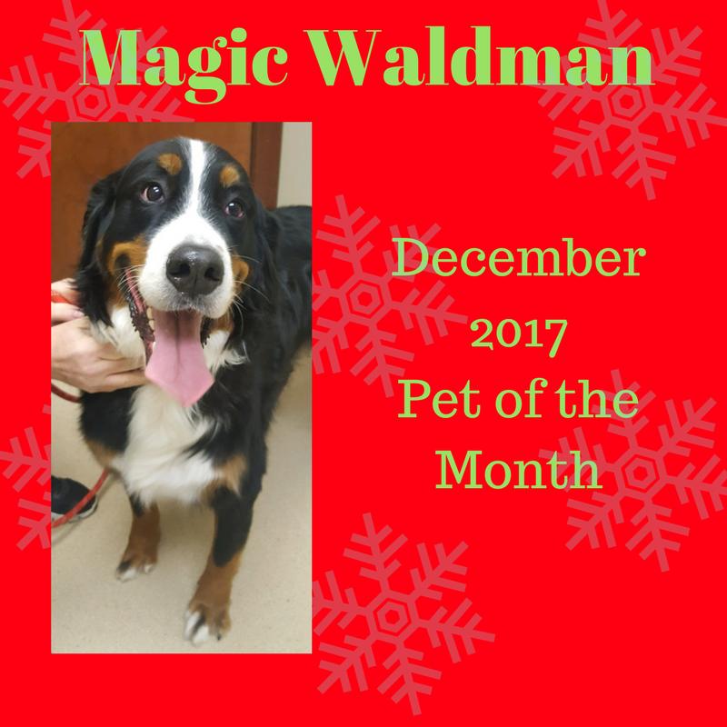 Magic Waldman