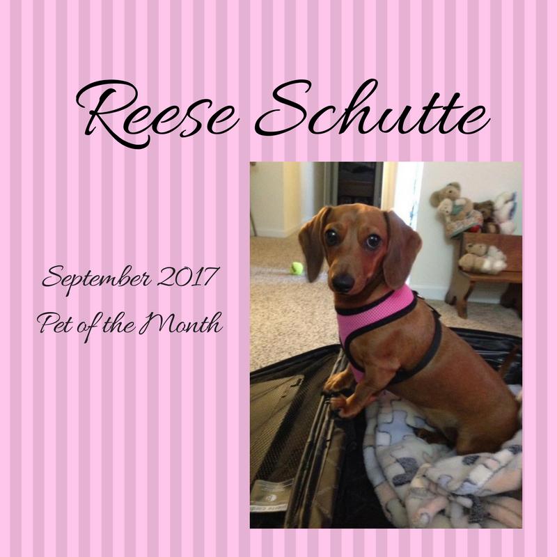 Reese Schutte