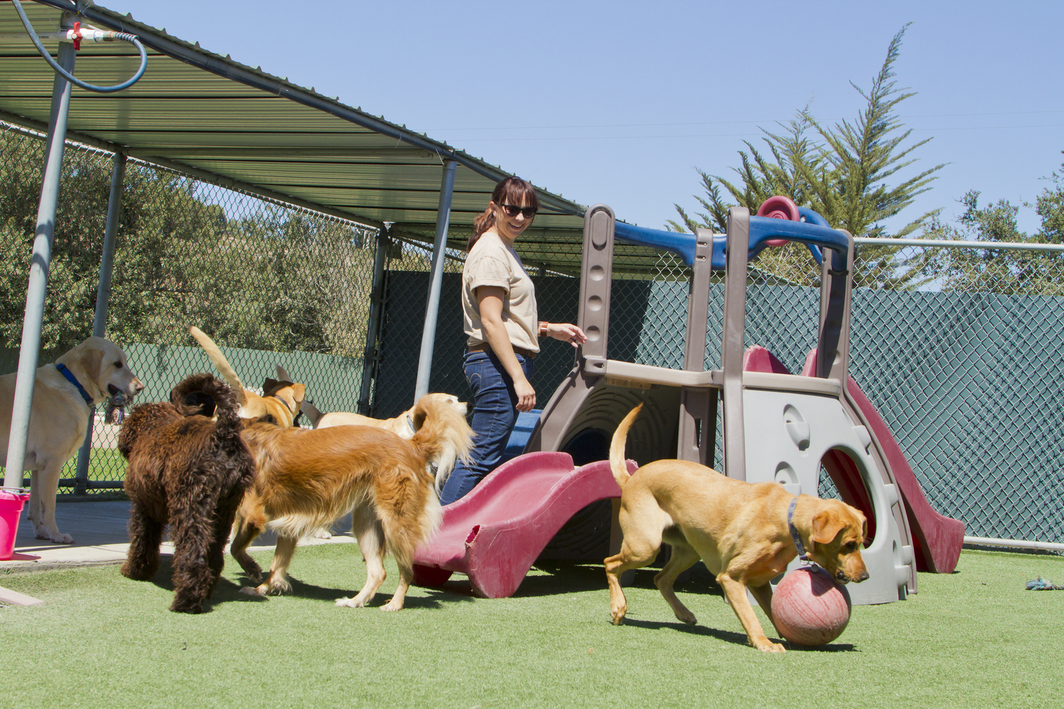 Pet Boarding for Dogs With Separation Anxiety