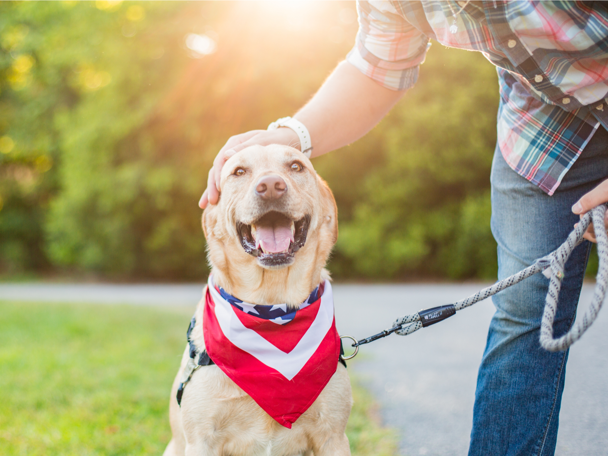 Fourth of July Survival Guide for You and Your Dogs and Cats