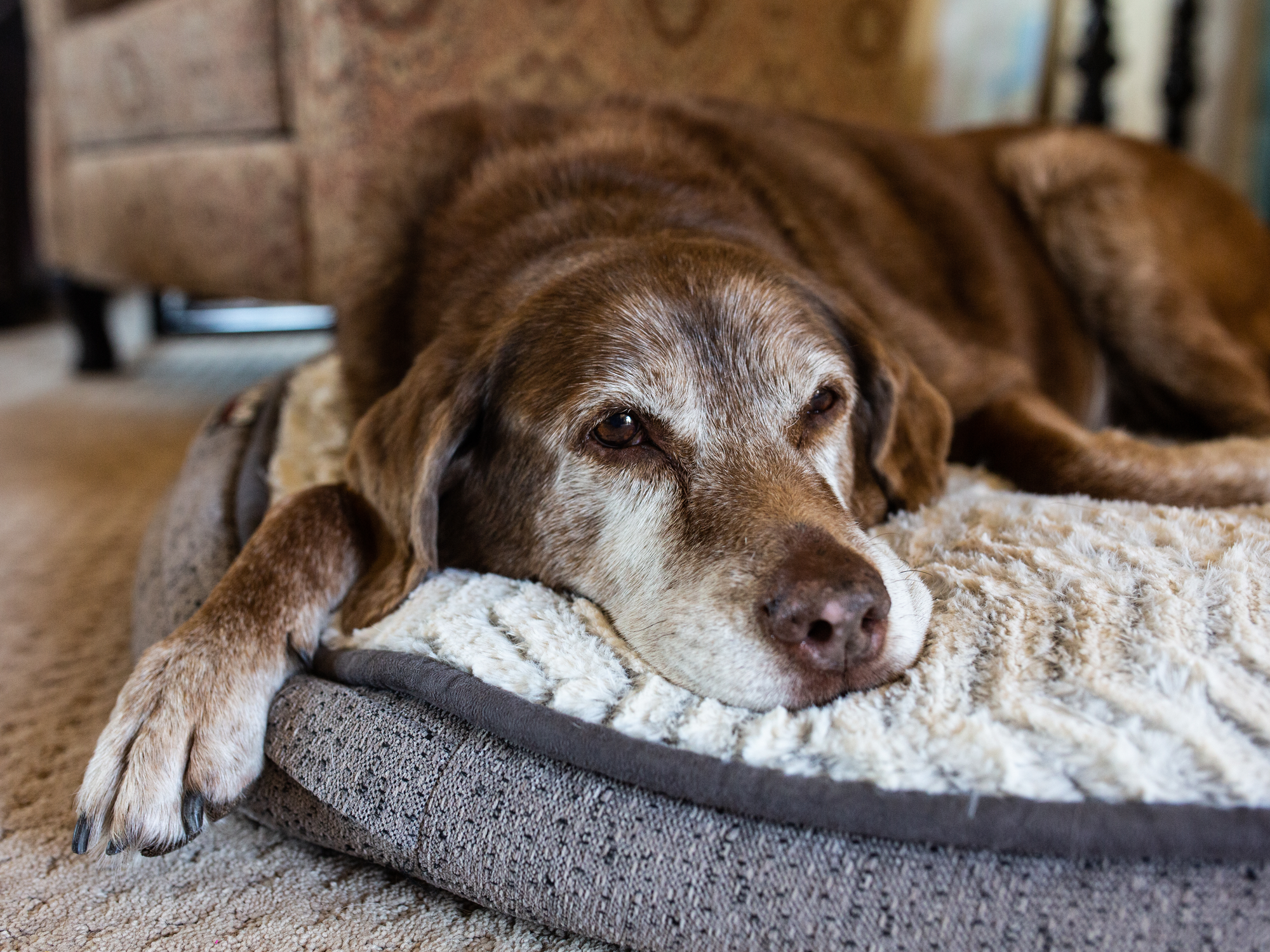 Pet Euthanasia: When Is It Time?