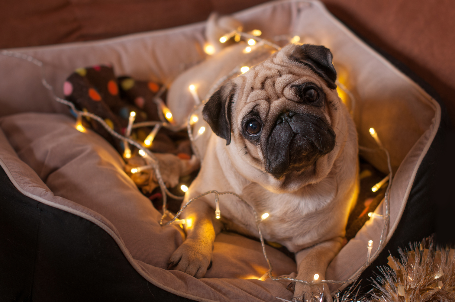 How to Protect Your Pet from Holiday Hazards