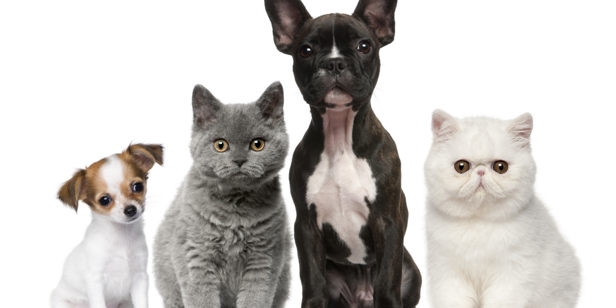 5 Reasons to Microchip Your Pet
