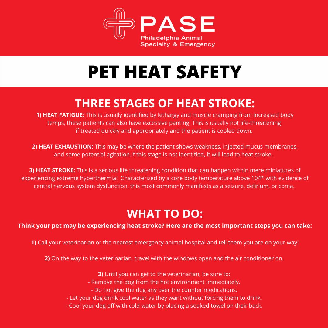 Preventing Heat Stroke in Pets