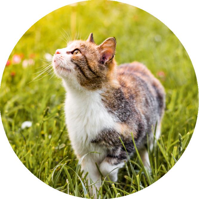 Petaluma Veterinary Hospital | client Testimonials