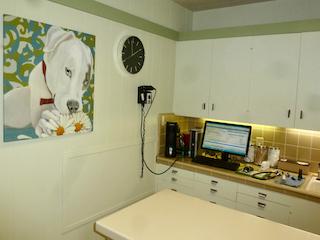 Petaluma Veterinary Hospital exam room 1 - image