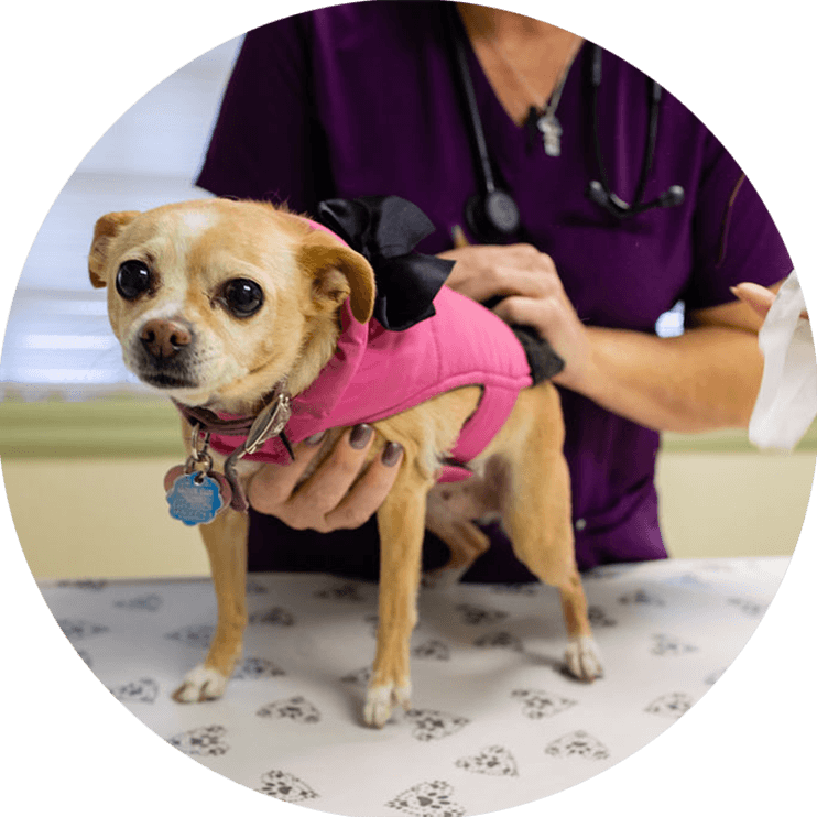 animal hospital services for cats and dogs