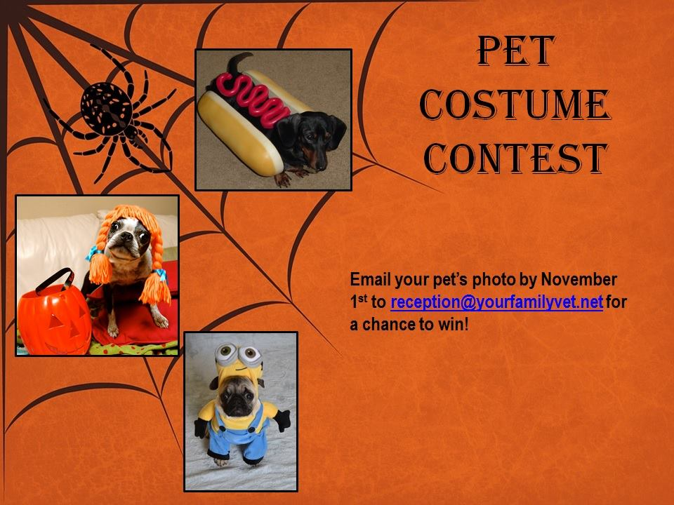 Pet Halloween Costume Contest