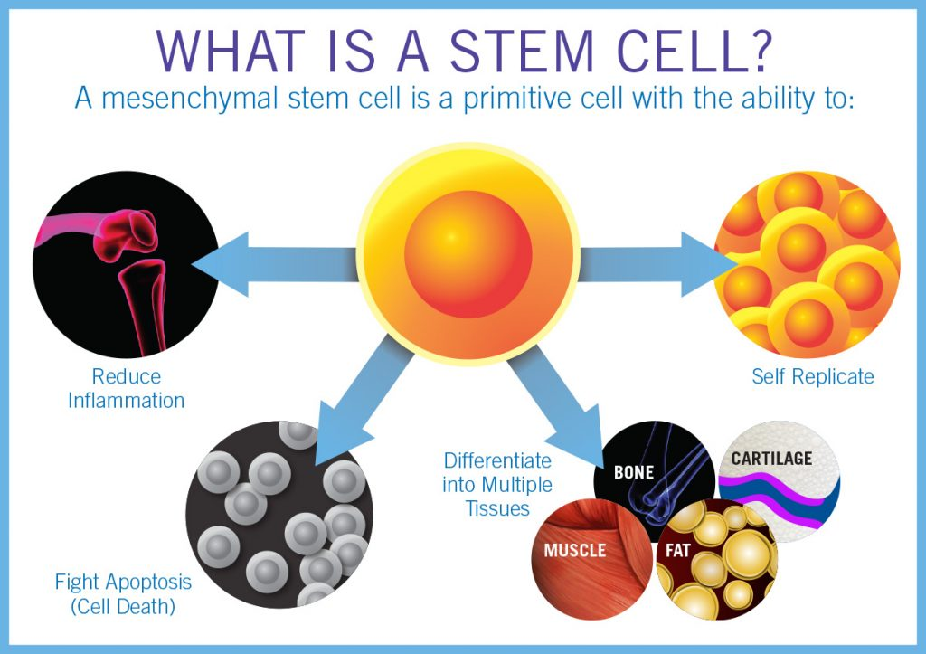 Stem Cell Treatment?