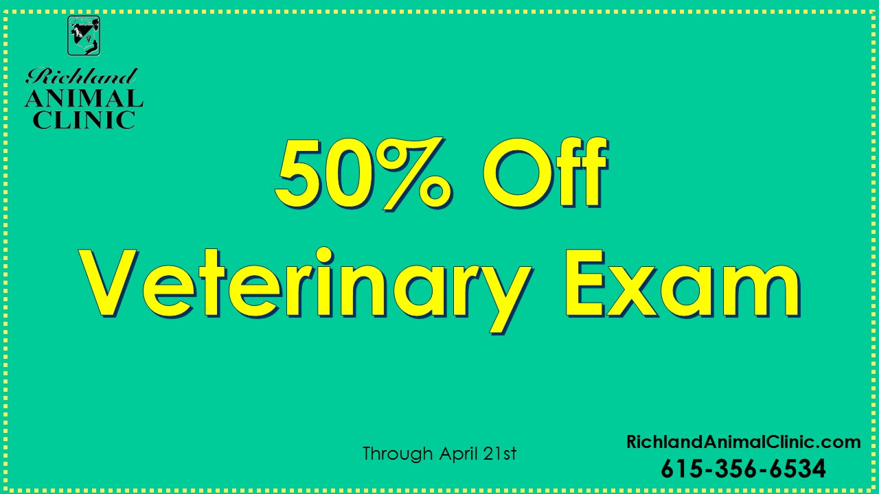 Need a Veterinarian in West Nashville? 50% Off First Exam