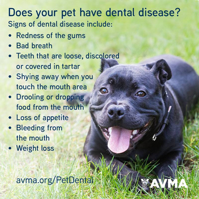 Pet Dental Care is Vital to Their Health