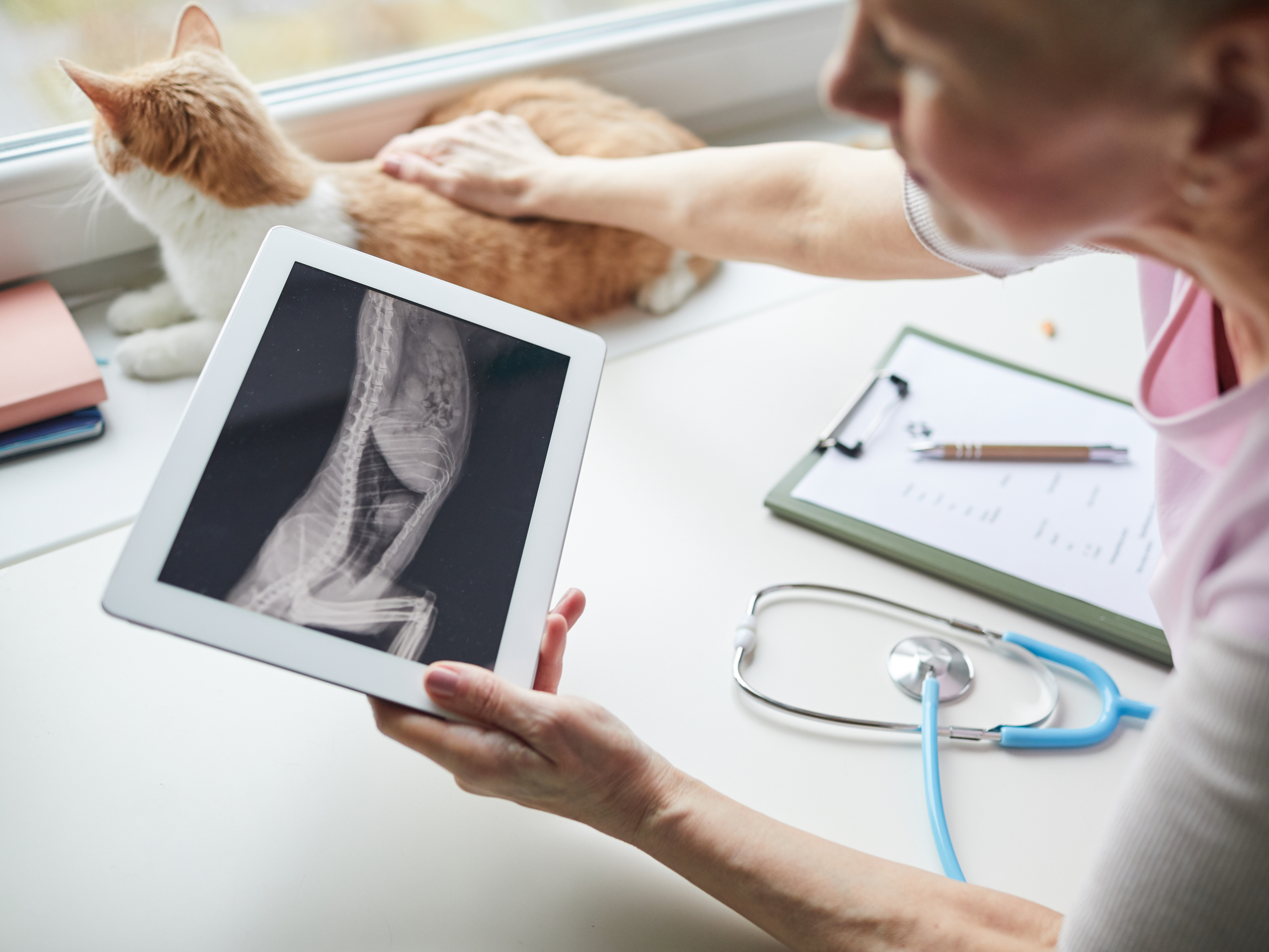 How Do I Know If My Pet Needs an X-ray?