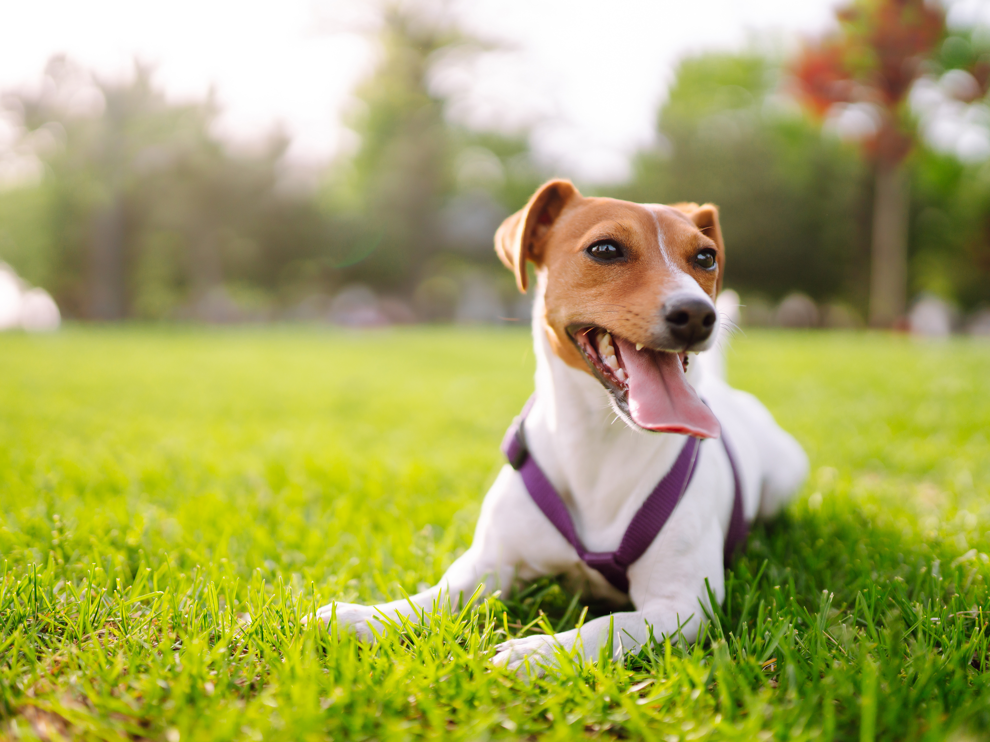 Flea and Tick Prevention in the Fall
