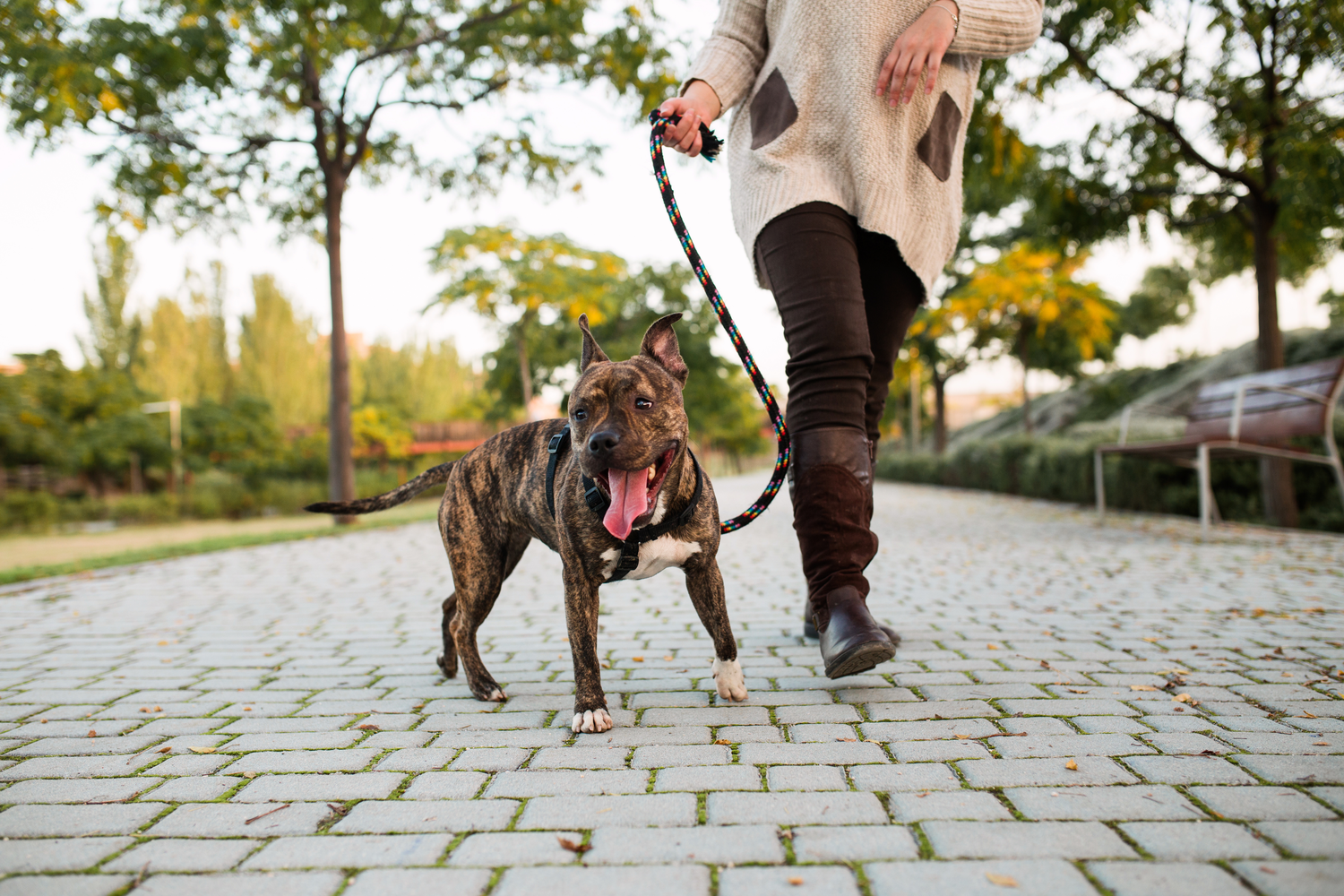 Four Health Benefits of Walks with Your Dog