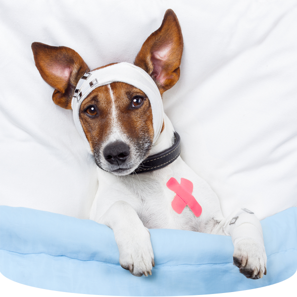 Expressions of Gratitude | Country Doctor Veterinary Clinic