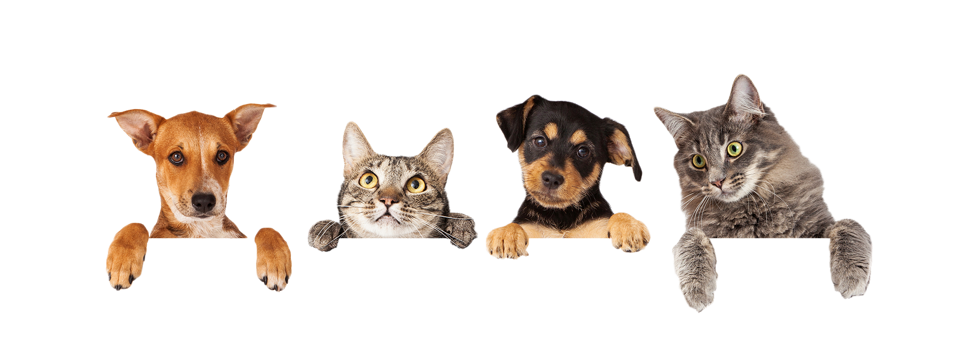 Best Online Site For Pet Food