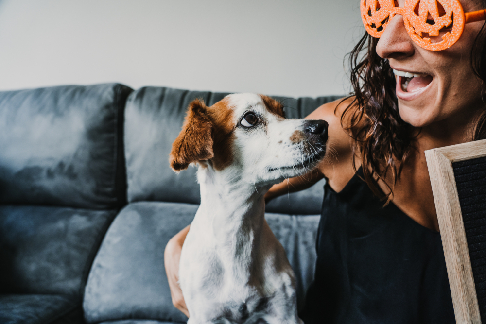 happy dog and owner at home