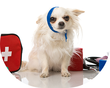 dog with first aid kits