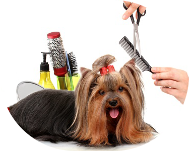 dog getting its hair groomed