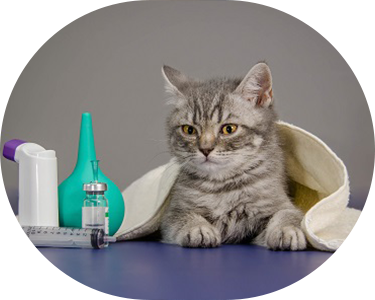 cat with medical apparatus
