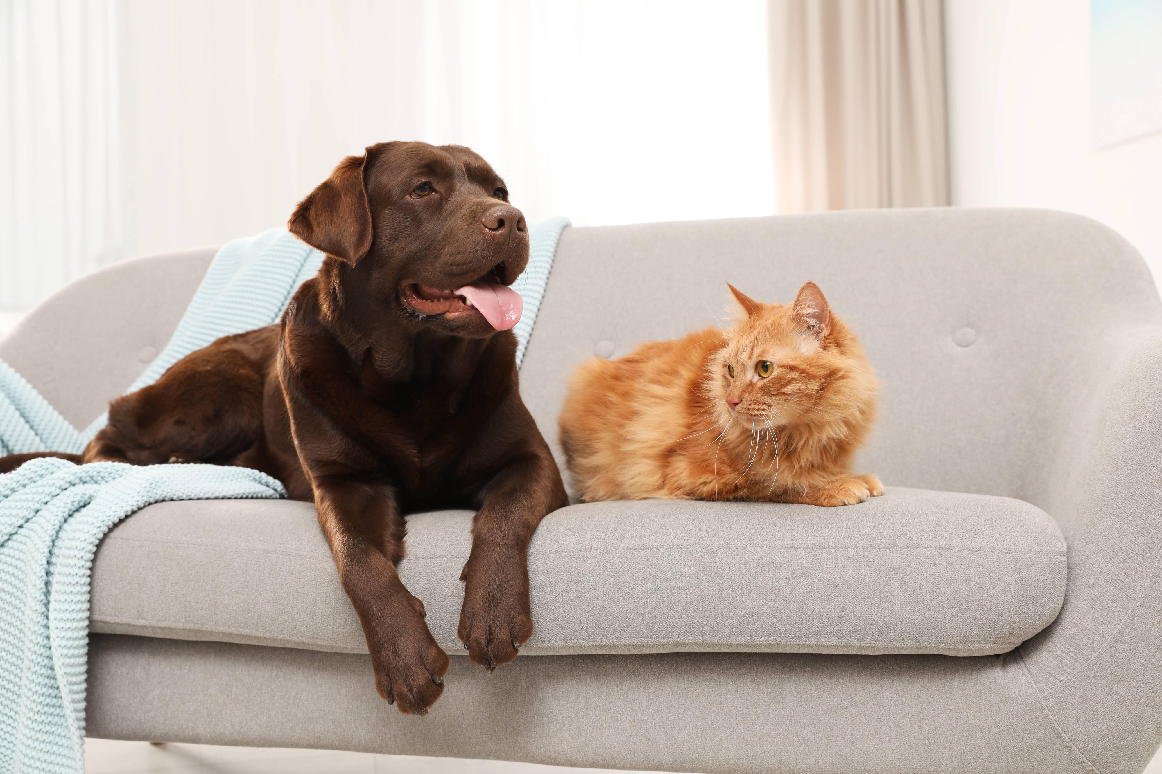 Keeping Senior Pets Active and Healthy