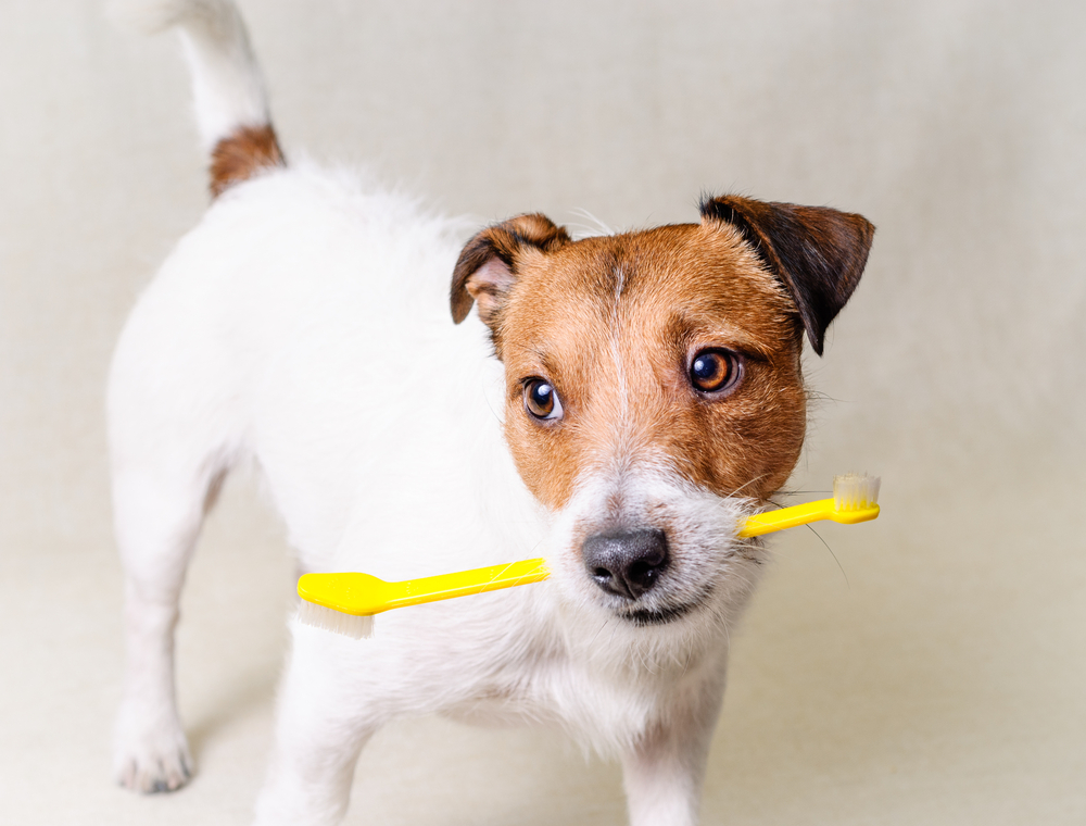 Preventing Periodontal Disease in Pets