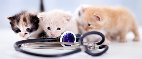 dental care for kittens