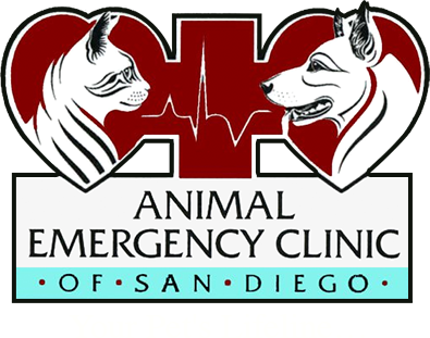 Shaking Pet | Animal Emergency Clinic of SD in Poway, CA