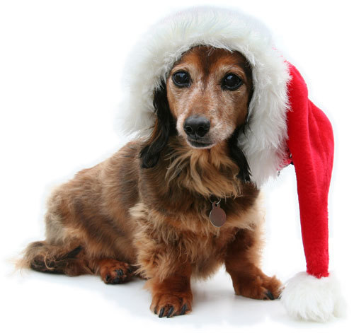 Pet Pictures with Santa & 10% off Grooming