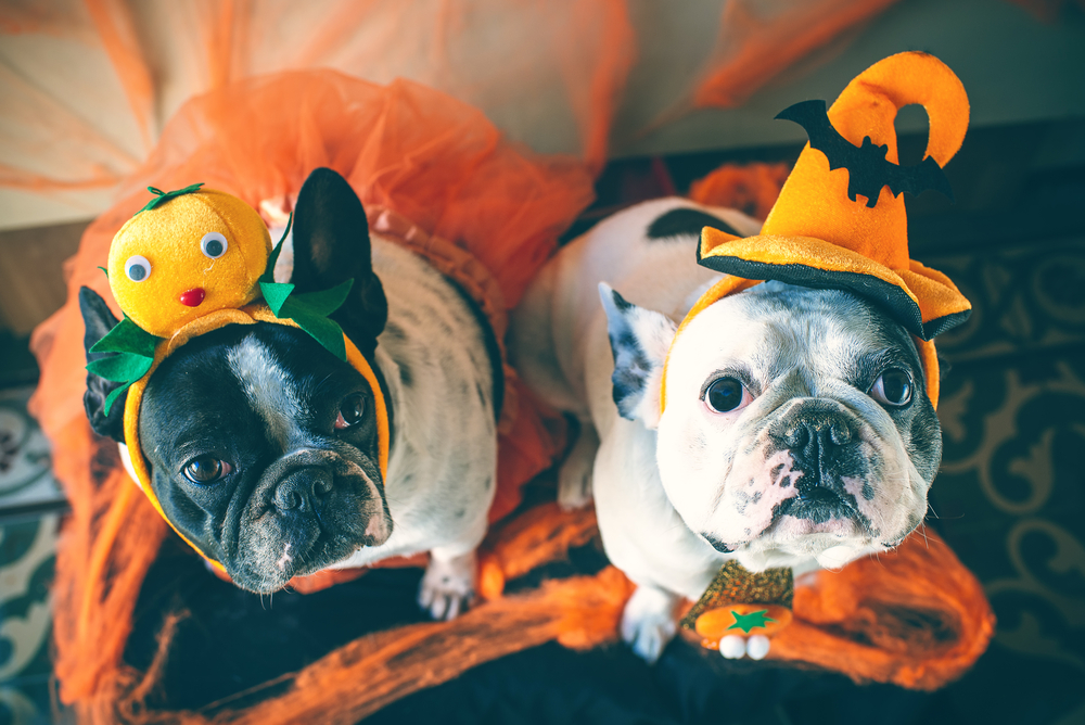 dogs on costume