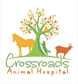 crossroads animal hospital seneca sc veterinarian