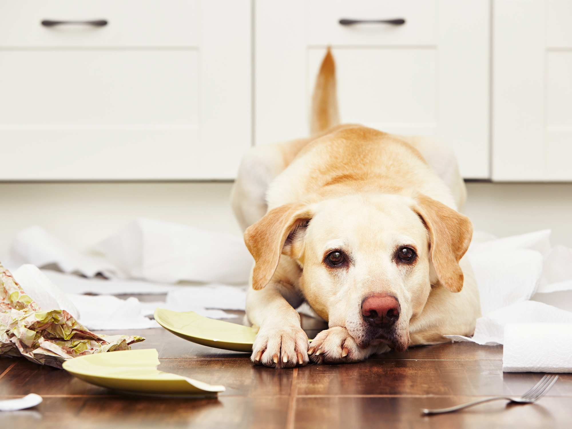 How Can Neutering Help With Pet Behavioral Problems?