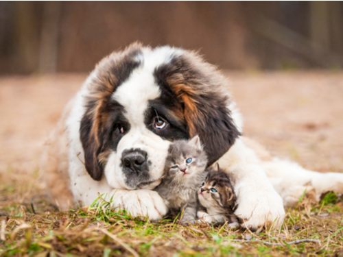10 Facts About Spaying and Neutering