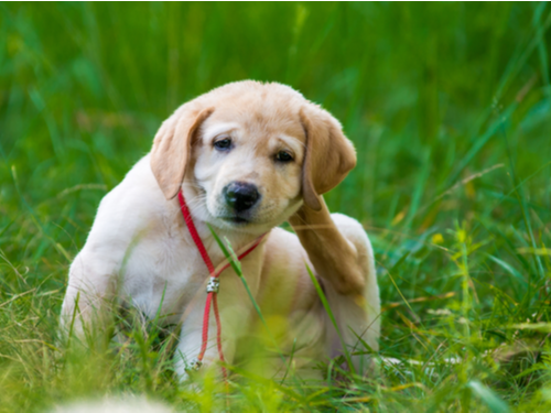 Flea Season is Here, is Your Pet Protected?