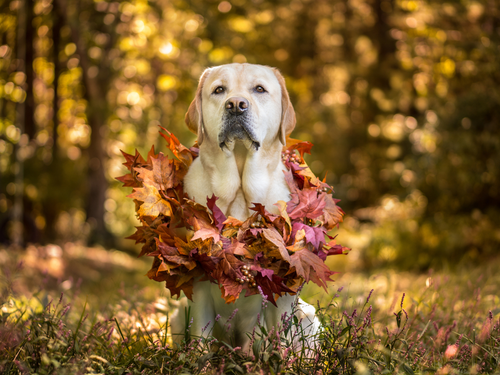 Thanksgiving Tips for a Happy and Healthy Pet