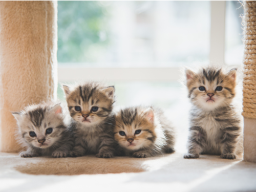 Selecting a New Kitten