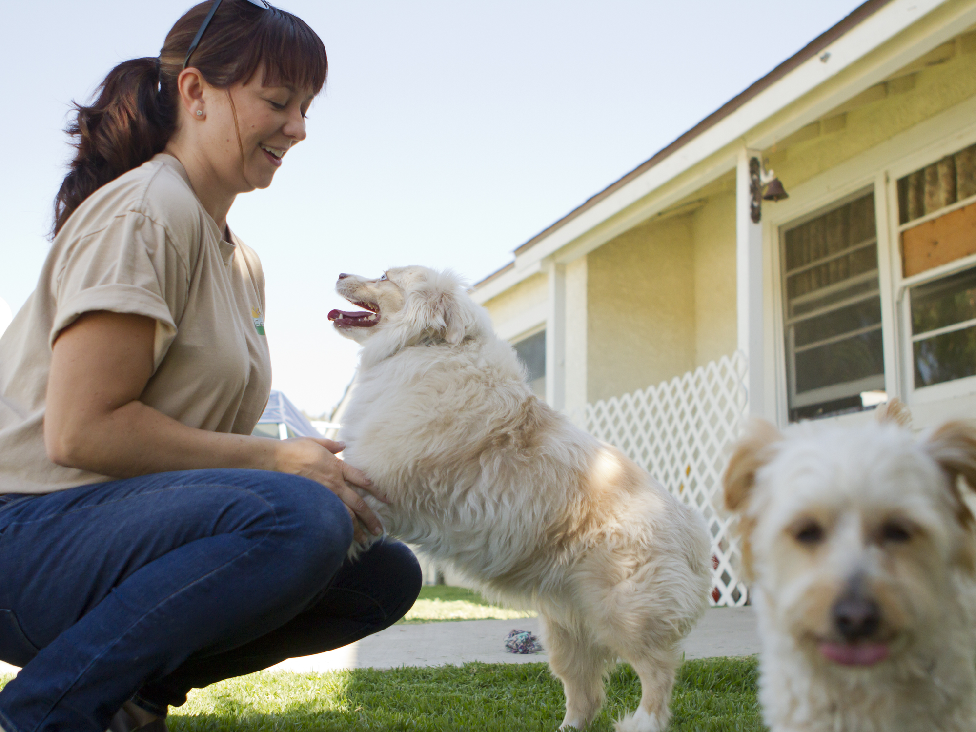 What Is the Difference Between Dog Sitting and Dog Boarding?