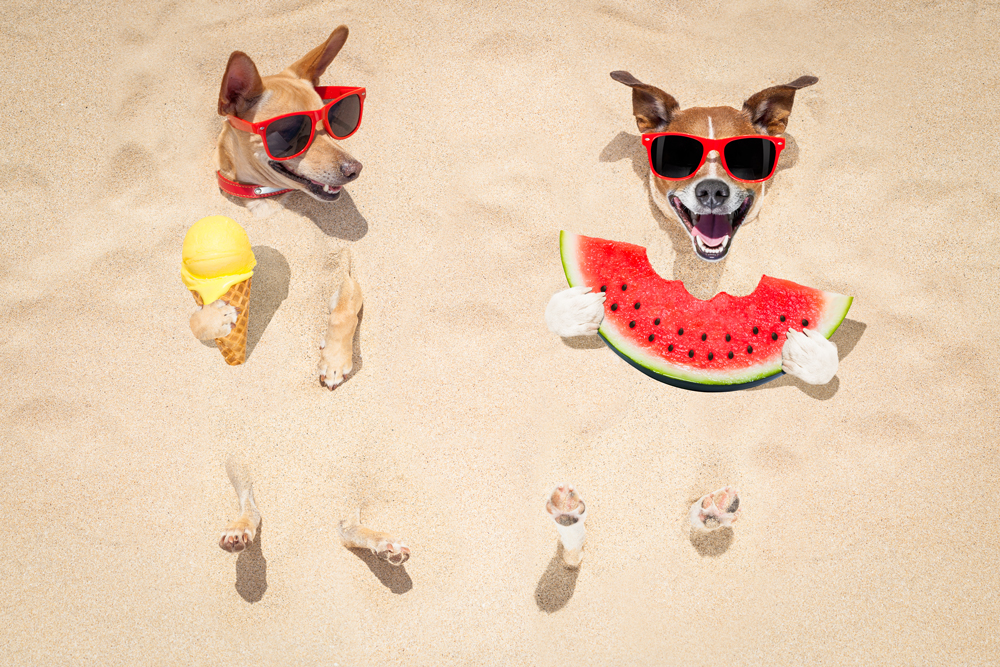 Tips On Keeping Your Pet Safe This Summer | Juno Beach