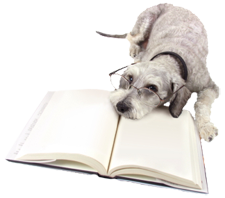 dog lying on a book