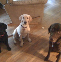 Shelby, Holley and Lucas