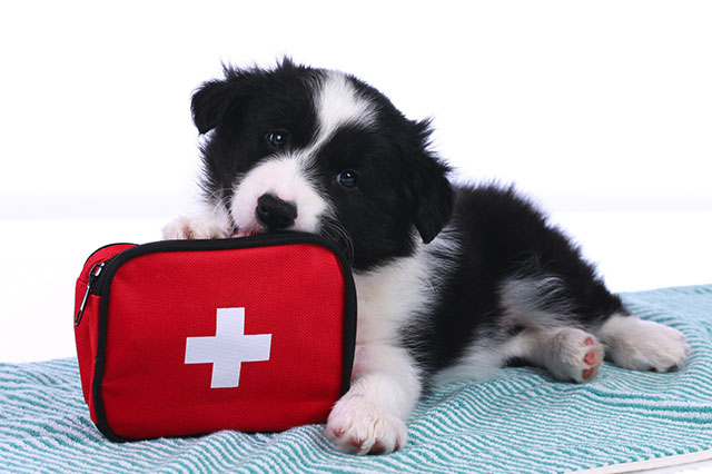 dog biting first aid kit
