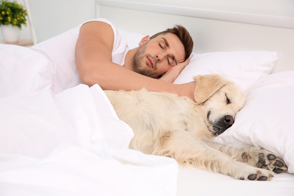 Risks Of Letting Your Dog Sleep In Bed With You Goose Creek Veterinary Hospital