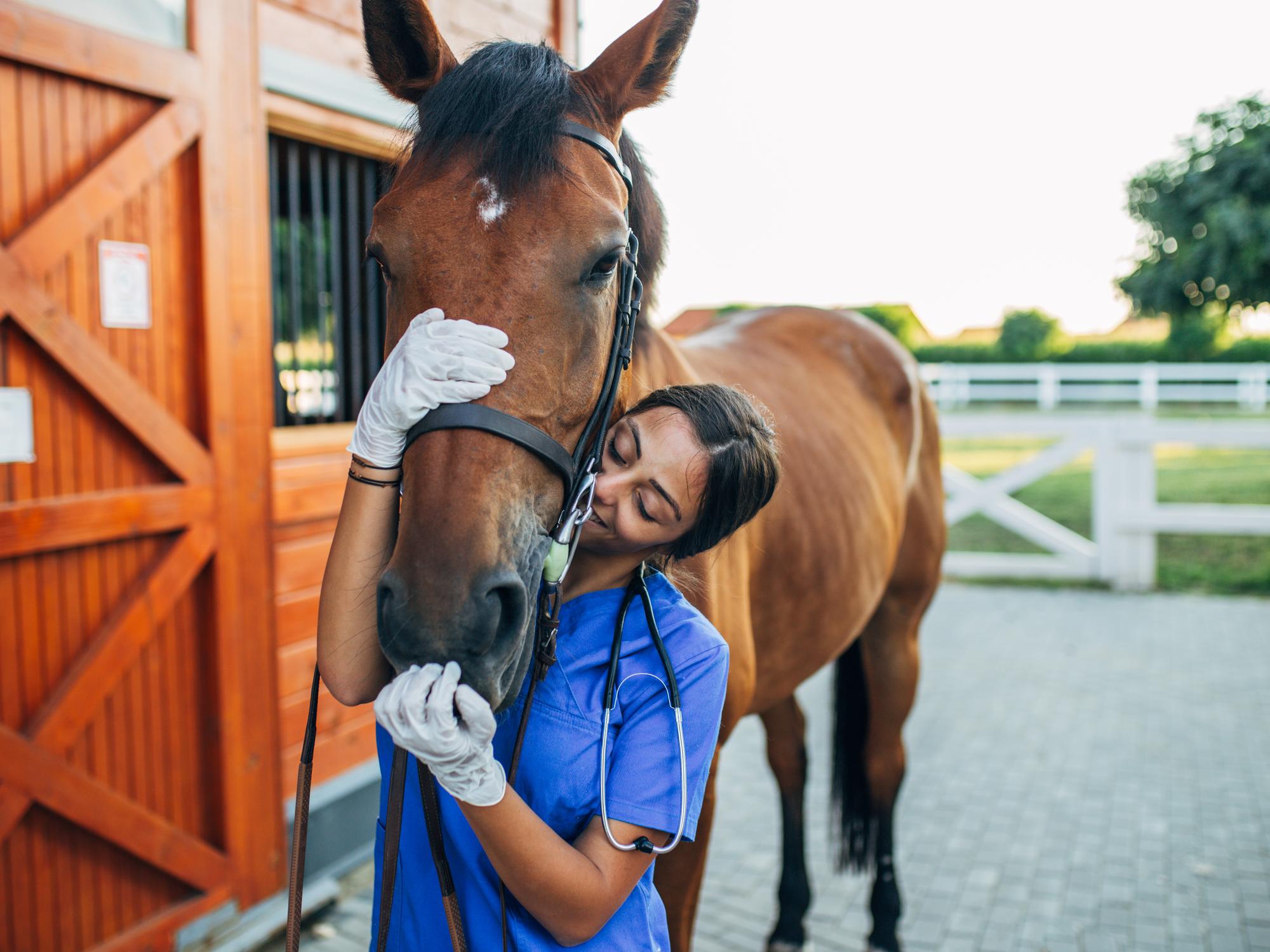 How Often Do Horses Need Vet Exams?
