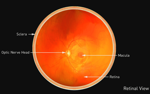 Digital Retina Photography