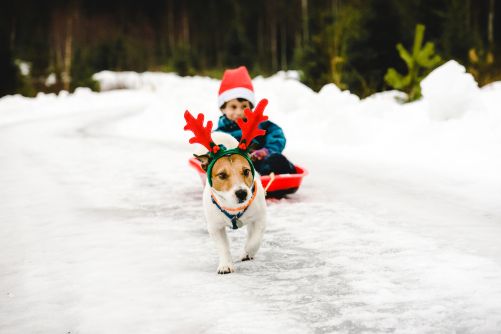 Tips to keep your pet safe this holiday season