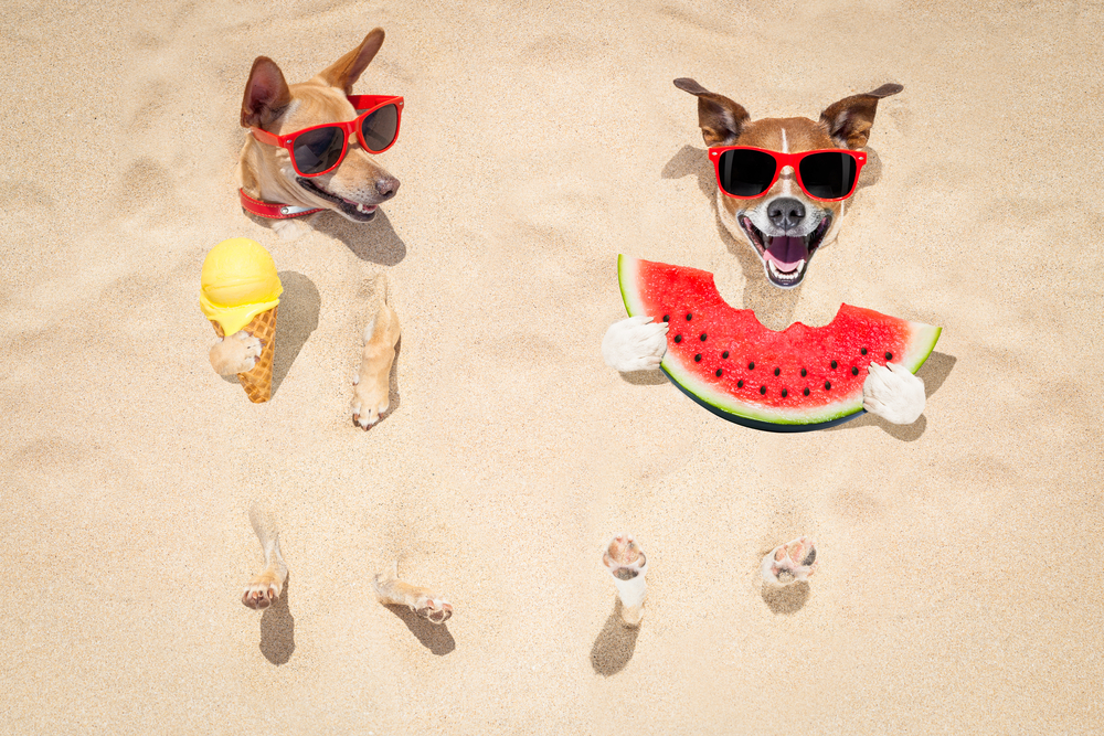 Summer is Here! All the Hot Weather Tips You Need to Know for Your Pet!