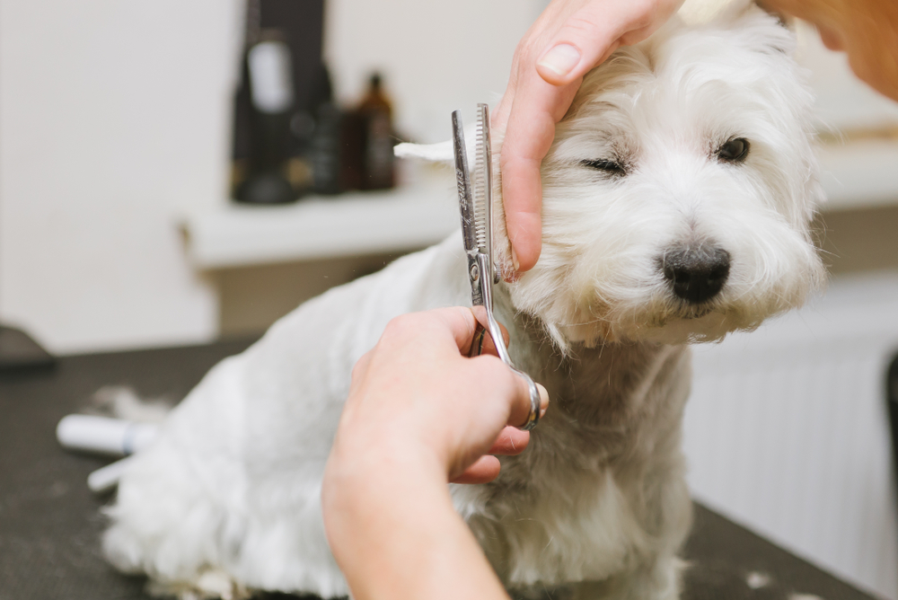 What is involved in Pet Grooming?