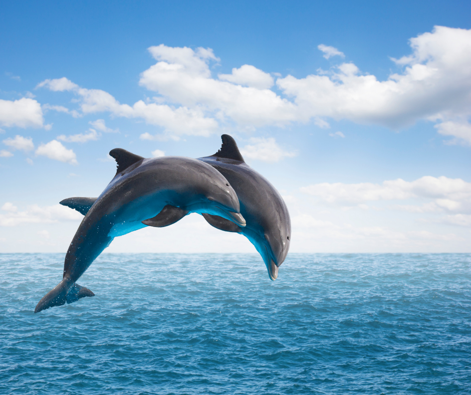 Protecting Dolphins When you Spot Them: Guidelines on How to Appreciate Their Presence